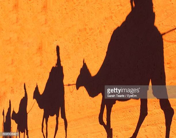 Shadow Of People On Riding On Camels In Row