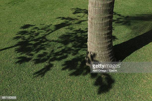 Shadow Of Tree Branch On Grass