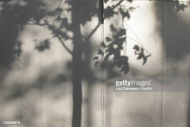 Shadow Of Tree On White Wall