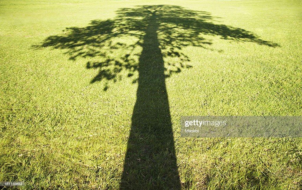 Shadow over grass field