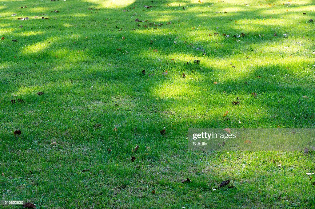 Shadow pattern on green grass : Stock Photo