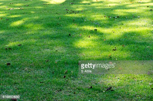 Shadow pattern on green grass : Stock Photo