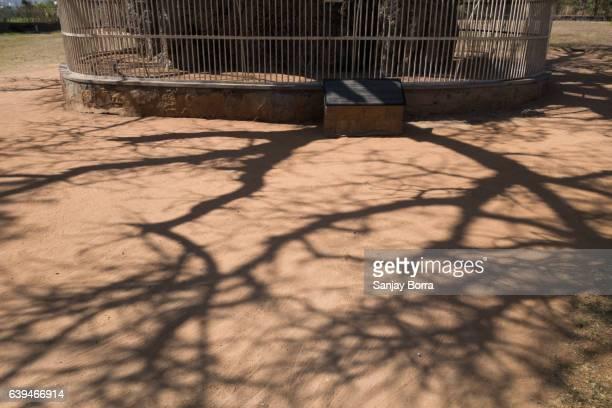 Shadow-Baobab-Tree-INDIA