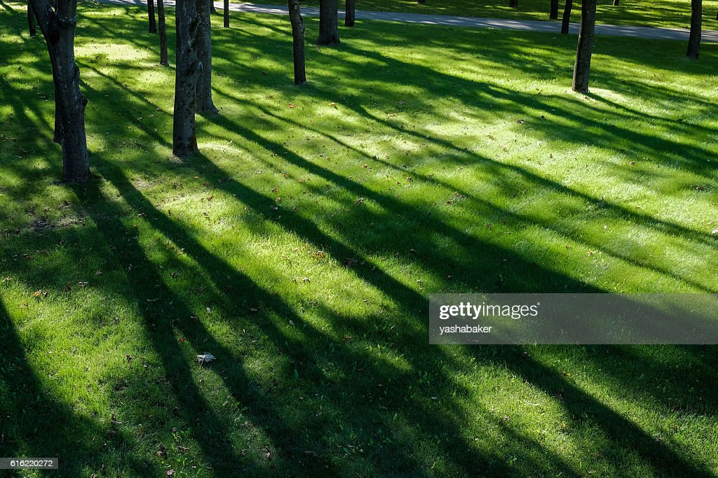 Shadows of tree branches  lie over the green lawn : Photo
