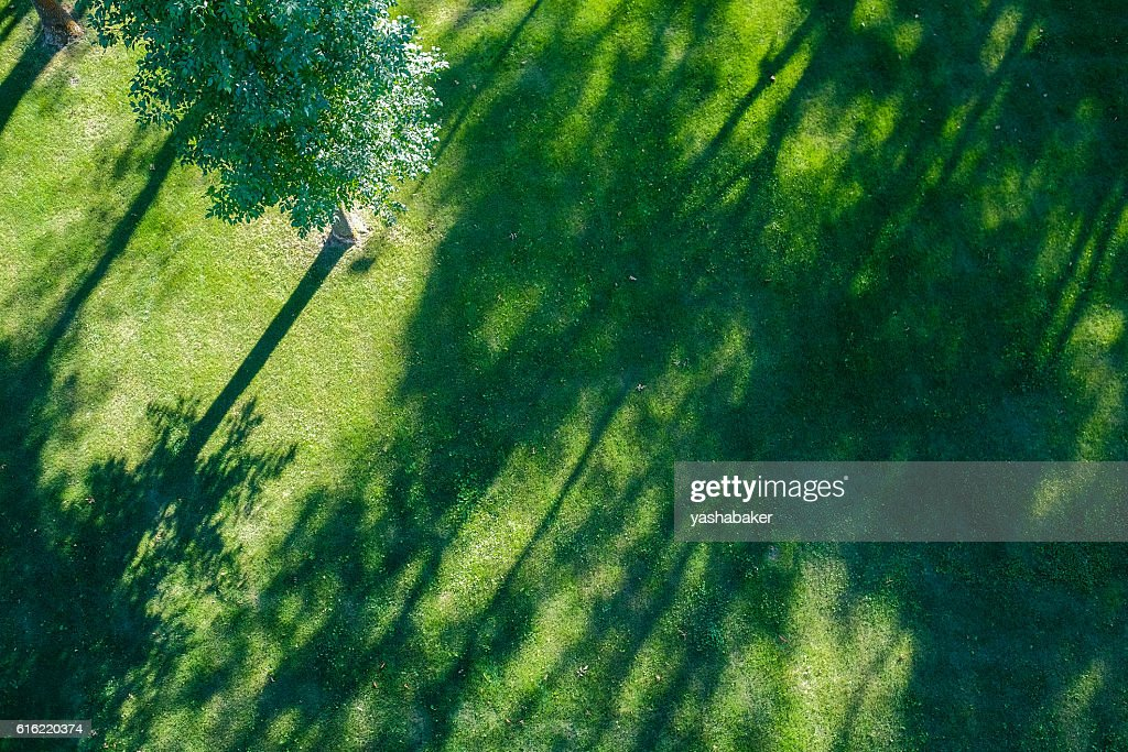 Shadows of tree branches  lie over the green lawn : Stock Photo