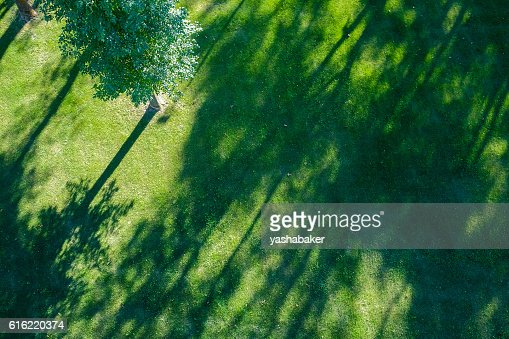 Shadows of tree branches  lie over the green lawn : Stock-Foto