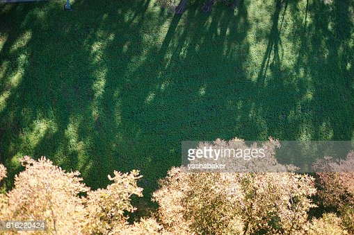 Shadows of trees lie on the lawn : Stockfoto