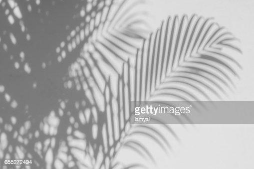 hojas de Palma de sombras en una pared blanca. : Foto de stock