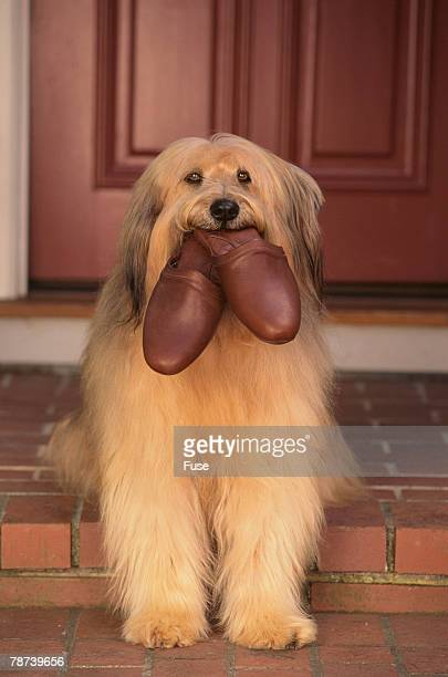 Shaggy Dog Fetching House Slippers