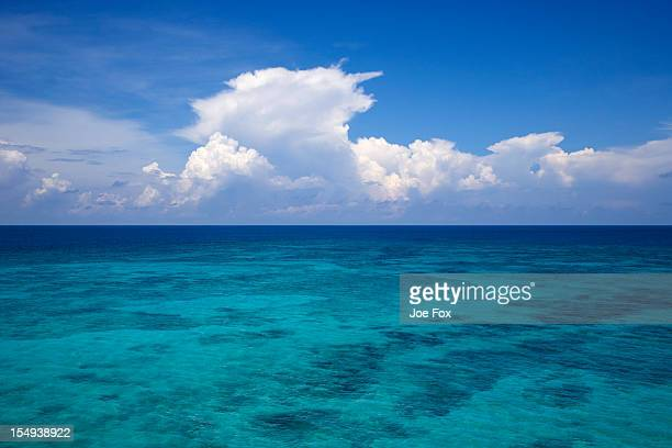 Shallow coral bank in the Gulf of Mexico