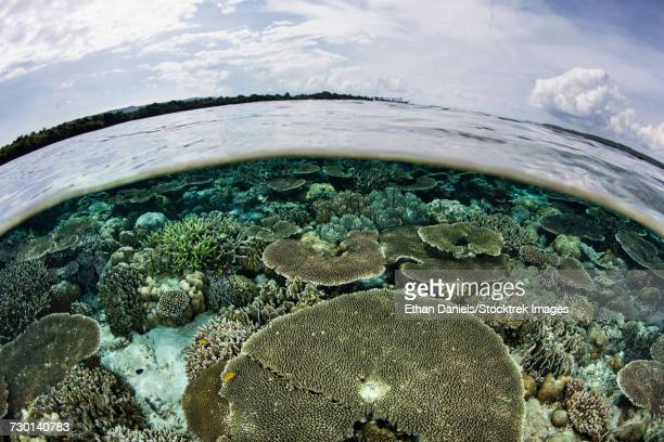 A shallow coral reef thrives in Wakatobi National Park, Indonesia.