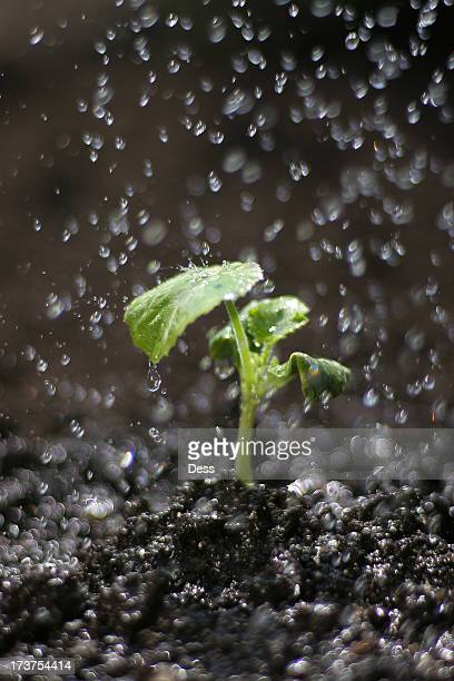 Shallow Depth of Field Watering Sprout