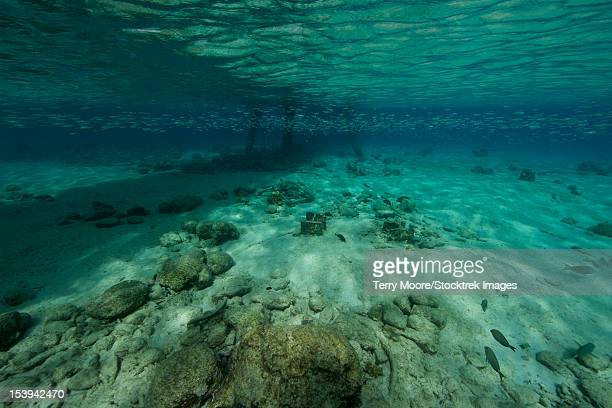 Shallow waters under Salt Pier, Bonaire, Caribbean Netherlands.