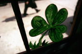 A shamrock is viewed in the window of an Irish pub in preparation for St Patrick's Day celebrations March 16 2005 in New York City New York one of...