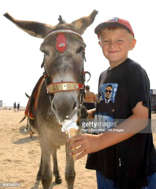 Shane Tandy aged 7 from WestonsuperMare who helps with the donkeys on the beach feeds Jenny an ice cream during a break from giving rides to children...