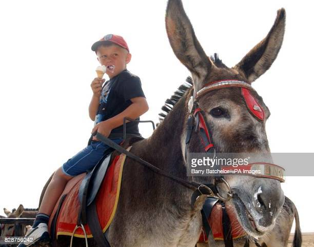 Shane Tandy aged 7 from WestonsuperMare who helps with the donkeys on the beach after feeding donkey Jenny an ice cream has one himself during a...
