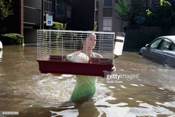 Shannon Danley carries a rabbit to a rescue boat after it was found floating in floodwater in an apartment complex after it was inundated with water...