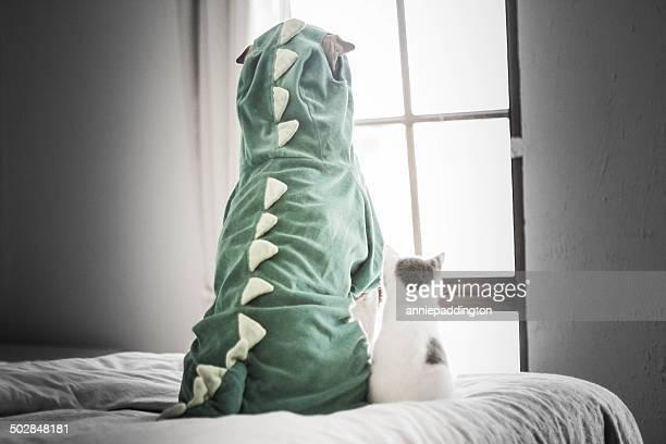 Shar pei in dinosaur costume and kitten looking through window