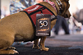 A shareholder credential card hangs from a service dog on the exhibition floor during the Berkshire Hathaway Inc annual shareholders meeting in Omaha...