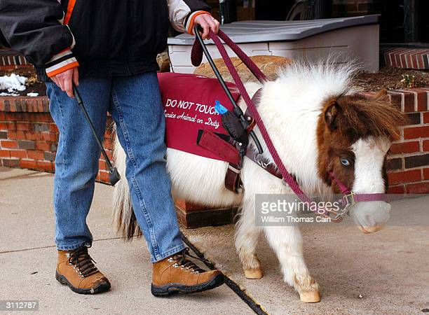 Shari Bernstiel of Lansdale Pennsylvania is helped along the sidewalk by Tonto her guide horse March 19 2004 in Lansdale Pennsylvania Tonto a...