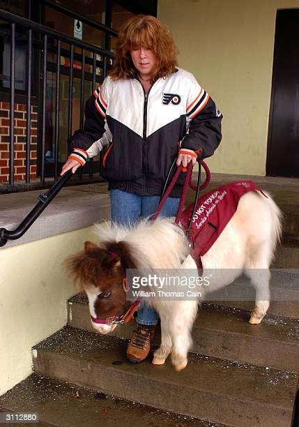 Shari Bernstiel walks down stairs with the help of her seeing guide horse Tonto March 19 2004 in Lansdale Pennsylvania Tonto a miniature horse who...