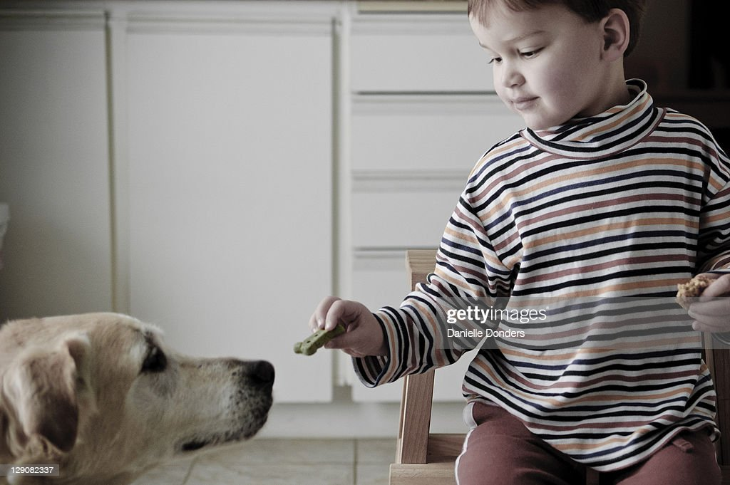 Sharing cookies with dog : Stock Photo
