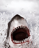 Horror shark attack,3d illustration