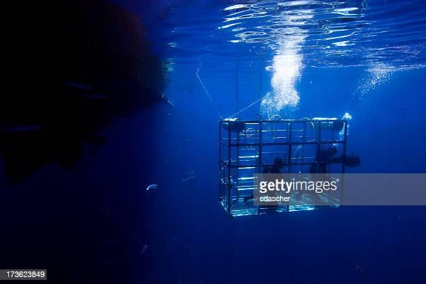Tiburón de sujeción