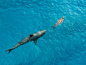 Shark diver pursues