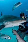Shark feeder feeds shark.
