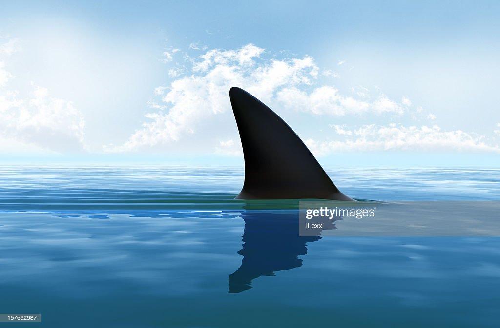 Shark fin above water. XXXL size