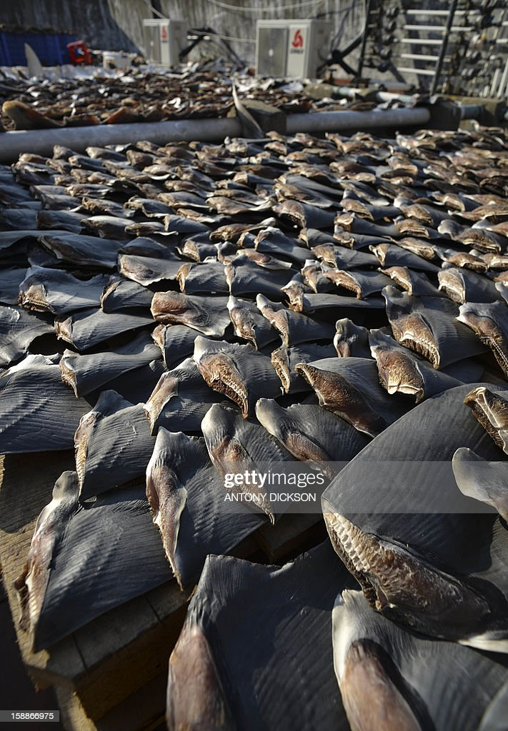 Shark fins drying in the sun cover the roof of a factory building in Hong Kong on January 2, 2013. Environmentalists and other concerned groups have raised concerns that the over-harvesting of fins is causing an enviormental calamity. Hong Kong is one of the world's biggest markets for shark fins, which are used to make soup that is an expensive staple at Chinese banquets. AFP PHOTO / Antony DICKSON