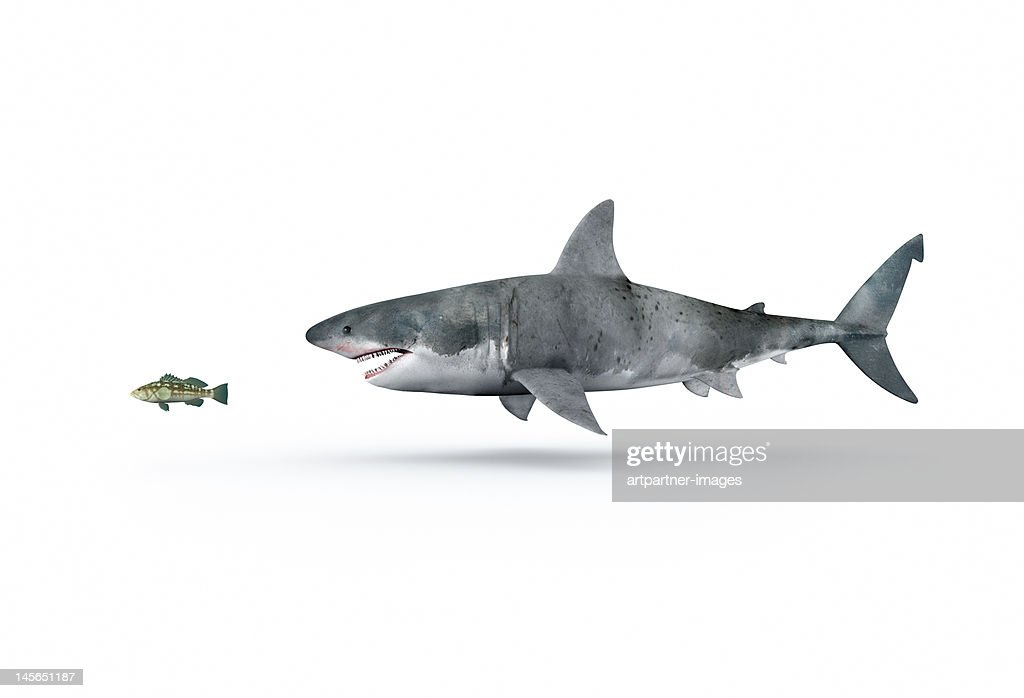 A shark hunting a small fish : Stock Photo