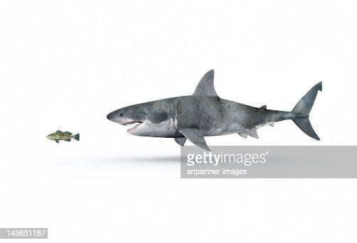 A shark hunting a small fish : Stock Photo