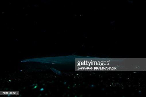 Shark : Stock Photo