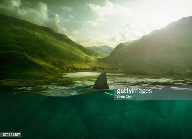 Shark swimming in lake near mountains