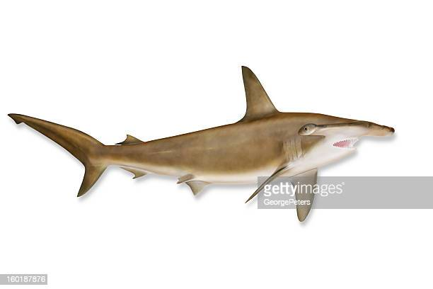 Shark with Clipping Path
