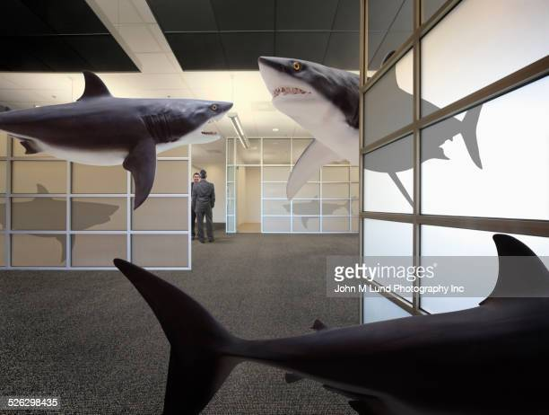Sharks swimming in office