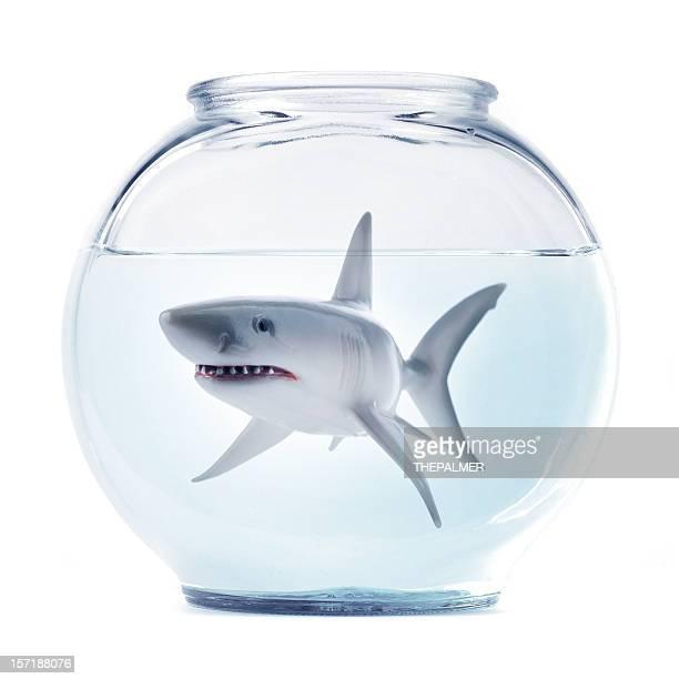 Le sharky