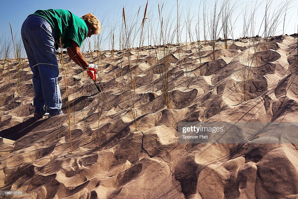 Sharon Lynch plants beach grass on protective sand dunes in the Breezy Point neighborhood on the oneyear anniversary of Hurricane Sandy on October 29...
