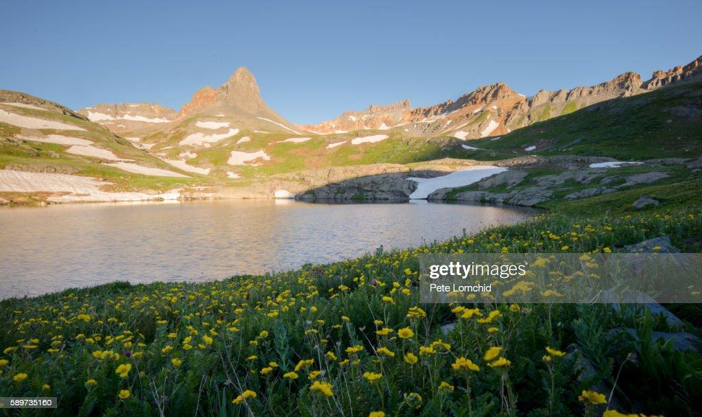 sharp mountain, wild flowers. Colorado