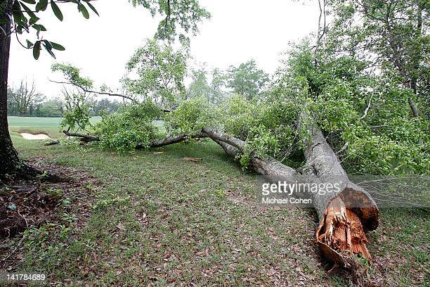 A shattered tree is seen beside the fifth fairway prior to the delayed start of the first round of the Mississippi Gulf Resort Classic held at Fallen...