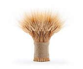 Sheaf of wheat isolated on white.