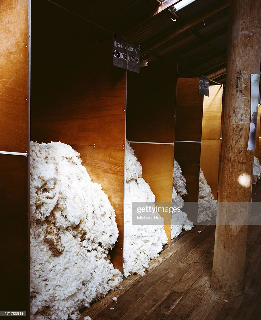 Shearing shed partitions of merino wool : Stock Photo