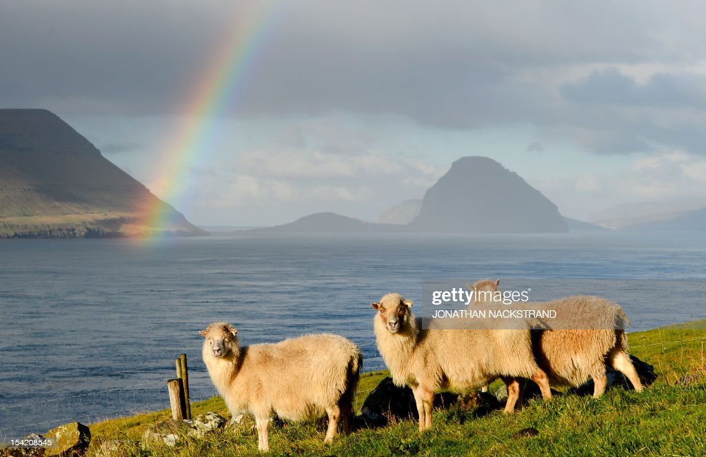 Sheep are pictured at the Kirkjubour village on the Streymoy Island as a rainbow appears between the Hestur (L) and the Koltur (R) islands on October 16, 2012, Faroe Islands. The Faroe Islands are known for its fishing and sheep farming as the main industries. AFP PHOTO / JONATHAN NACKSTRAND