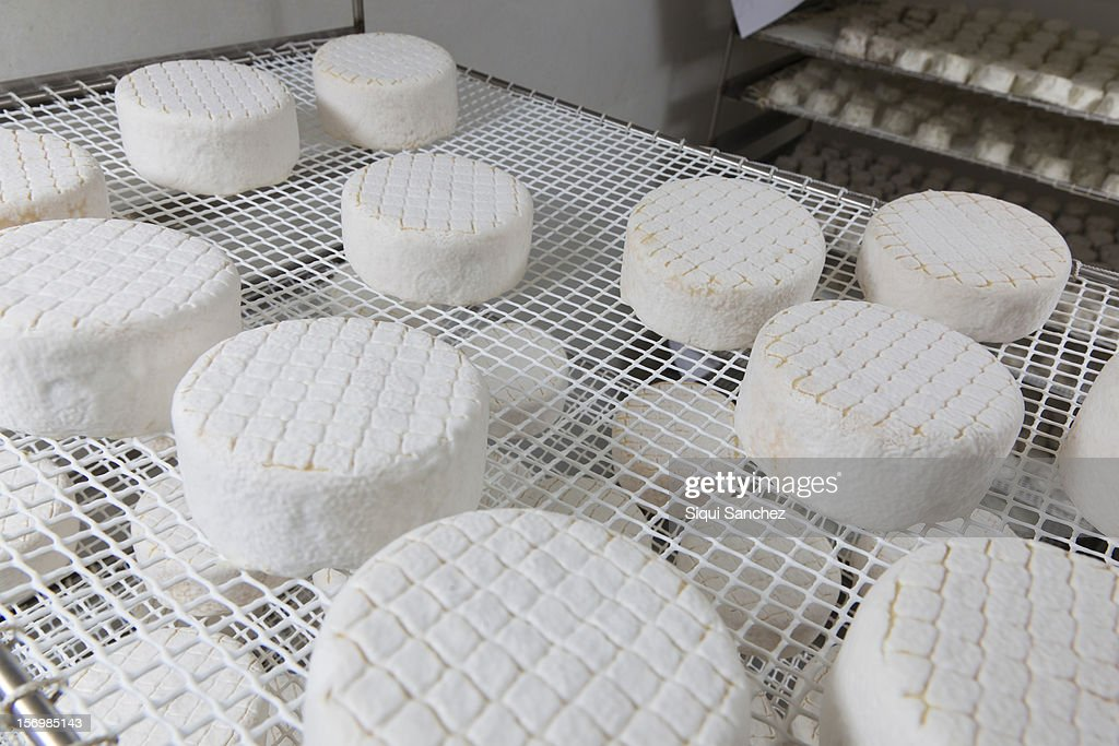 Sheep cheese : Stock Photo