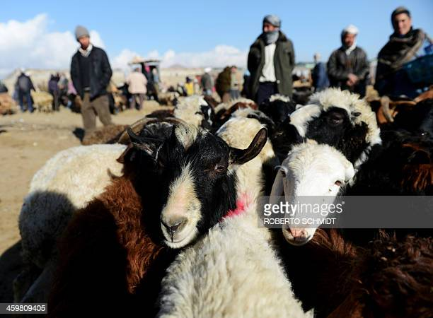 Sheep for sale are looked after by traders at a livestock market in the outskirts of Kabul on December 28 2013 Hundreds of Afghan traders gather...