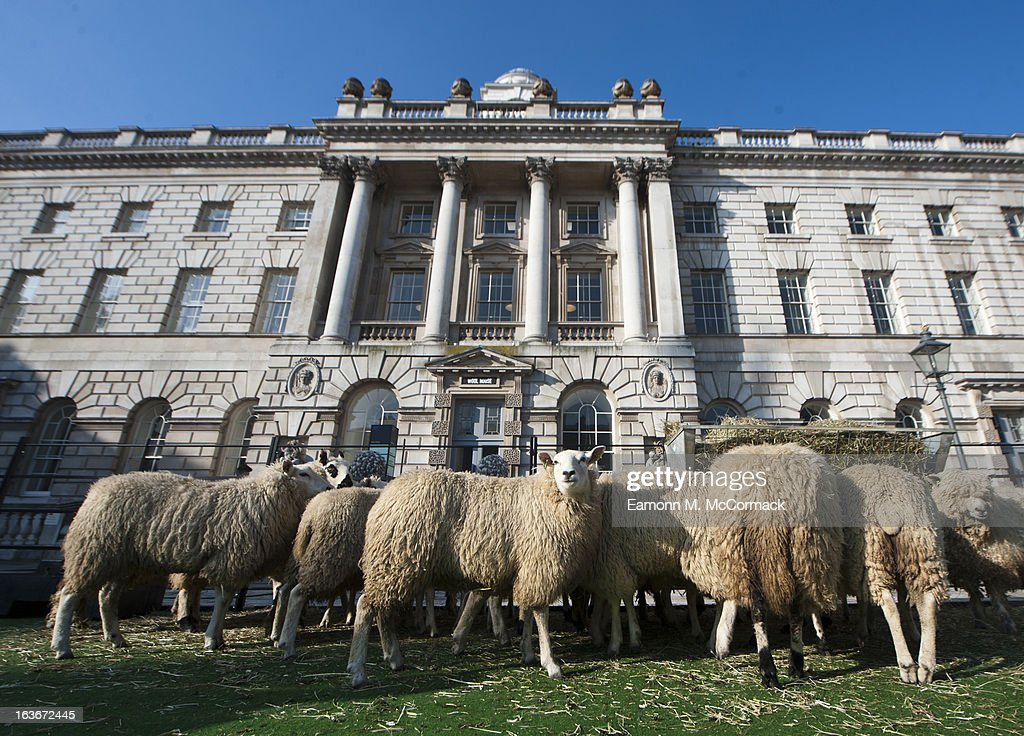 Sheep graze at Somerset House to celebrate the Wool House event, open until March 24th at Somerset House on March 14, 2013 in London, England.