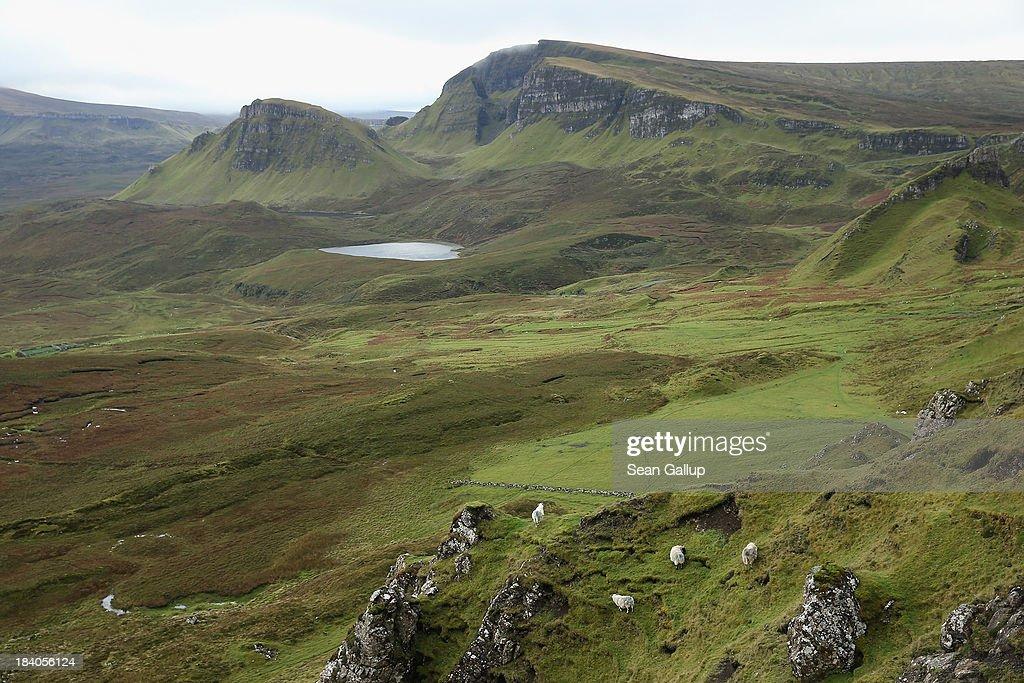 Sheep graze near Quiraing mountain on October 5 2013 near Staffin Isle of Skye Scotland The Isle of Skye is a popular tourist destination
