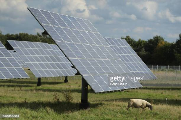 A sheep grazes among solar panels at a solar farm on September 6 2017 in Sonnewalde Germany Germany is making strong progress in meeting aggressive...
